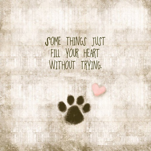 Pet Quotes And Sayings Quotesgram