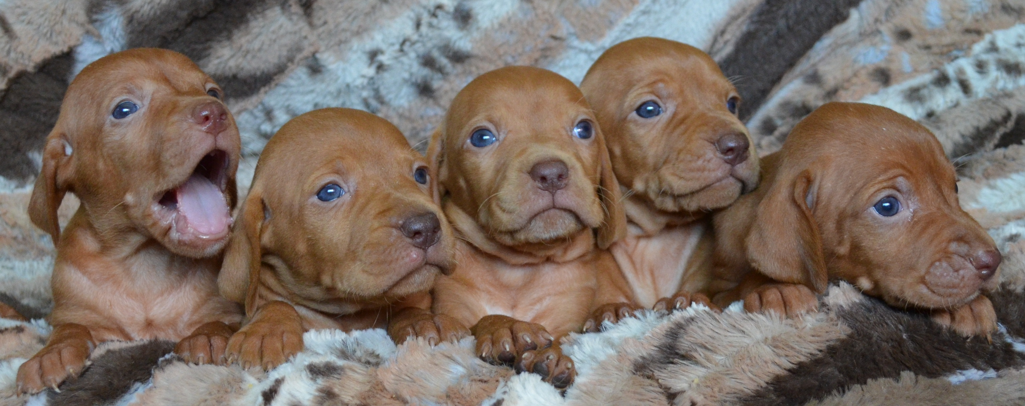 Cute Puppies For Sale World Of Animal