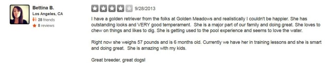 Golden Meadows Retrievers Yelp Review 1