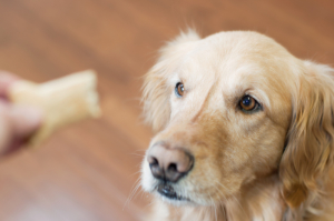 The Right Way to Train and Discipline Your Dog | Golden Meadows Retrievers
