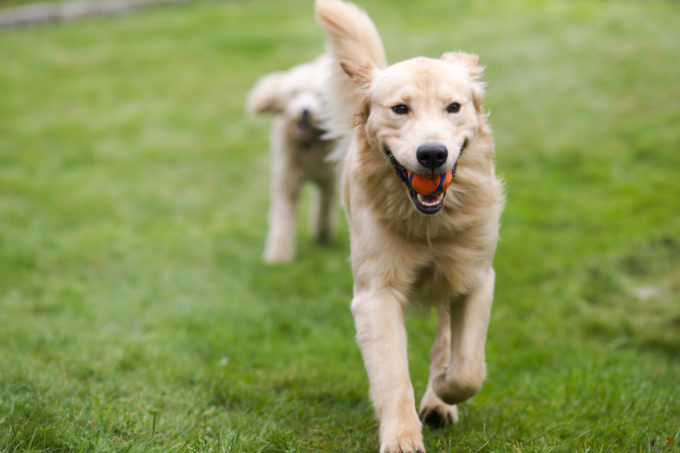 7 Ways to Keep Fido Fit (and Happy) | Golden Meadows