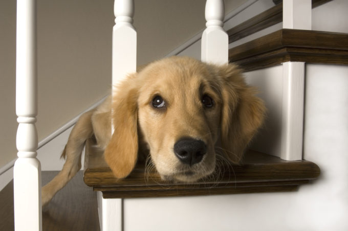 Puppy-Proofing and Preparation Checklist | Golden Meadows