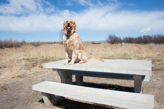 Summer Fun Suggestions For Pup-Perfect Excursions | Golden Meadows