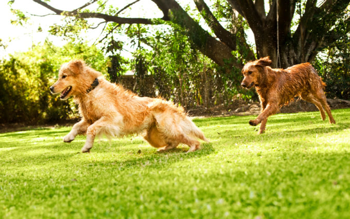 Making Your Backyard a Better, Safer Place for Dogs | Golden Meadows