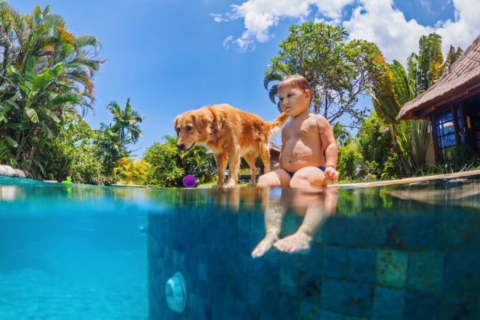 9 Swimming Safety Tips for Dogs | Golden Meadows Retrievers