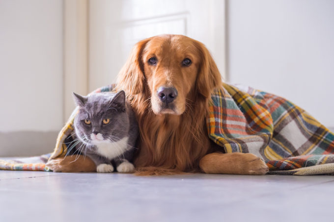 Winterization Checklist for Keeping Pets Safe, Healthy | Golden Meadows